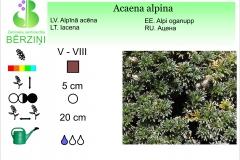 Acaena alpina
