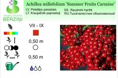 Achilea millefolium Summer Fruits Carmine