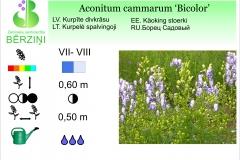 Aconitum cammarum Bicolor