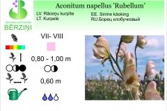 Aconitum napellus Rubellum