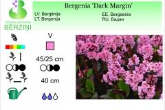Bergenia Dark Margin