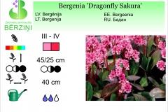 Bergenia Dragonfly Sakura