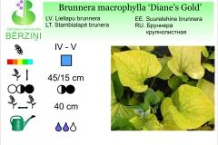 Brunnera macrophylla Dianes Gold