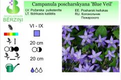 Campanula poscharskyana Blue Veil