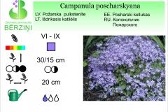 Campanula poscharskyana