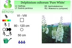 Delphinium cultorum Pure White