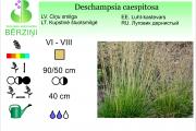 Deschampsia caespitosa
