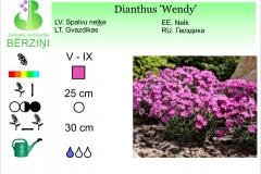 Dianthus Wendy