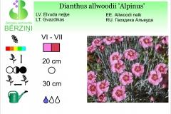 Dianthus allwoodii Alpinus
