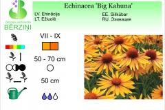Echinacea Big Kahuna