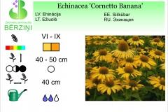 Echinacea Corneto Banana