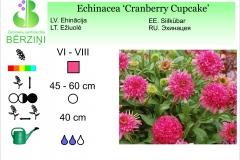 Echinacea Cranberry Cupcake