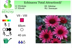 Echinacea Fatal Attraction®