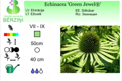 Echinacea Green Jewel®