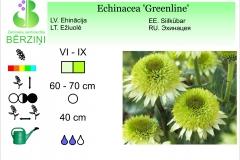 Echinacea Greenline