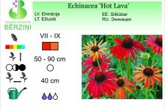 Echinacea Hot Lava