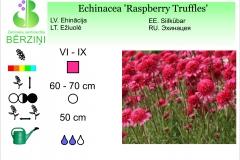 Echinacea Raspberry Truffles