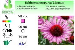 Echinacea purpurea Magnus
