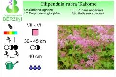 Filipendula rubra Kahome