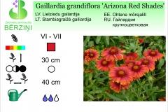Gaillardia grandiflora Arizona Red Shades