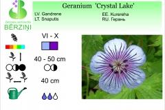 Geranium Crystal Lake