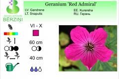 Geranium Red Admiral