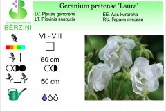 Geranium pratense Laura