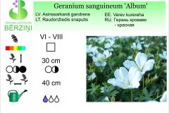 Geranium sanguineum Album