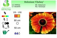 Helenium Chelsey