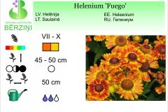 Helenium Fuego
