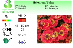 Helenium Salsa