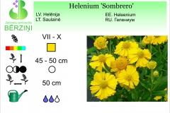 Helenium Sombrero