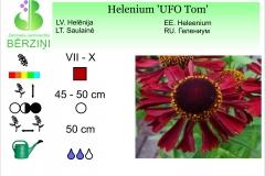 Helenium UFO Tom