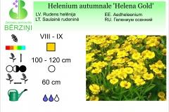 Helenium autumnale Helena Gold
