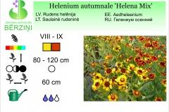 Helenium autumnale Helena Mix