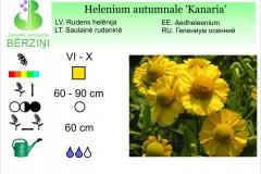 Helenium autumnale Kanaria