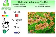Helenium autumnale Tie Dye