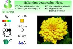 Helianthus decapetalus Plena