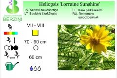 Heliopsis Lorraine Sunshine