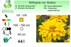 Heliopsis var. scabra