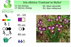 Iris sibirica Contrast in Styles