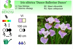 Iris sibirica Dance Ballerine Dance