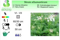 Meum athamanticum