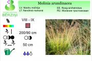 Molinia arundinacea