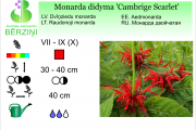 Monarda didyma Cambrige Scarlet