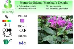 Monarda didyma Marshall's Delight