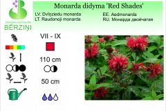 Monarda didyma Red Shades