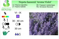 Nepeta faassenii Aroma Violet