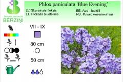 Phlox paniculata Blue Evening