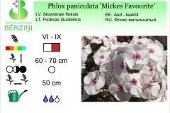 Phlox paniculata Mickes Favourite